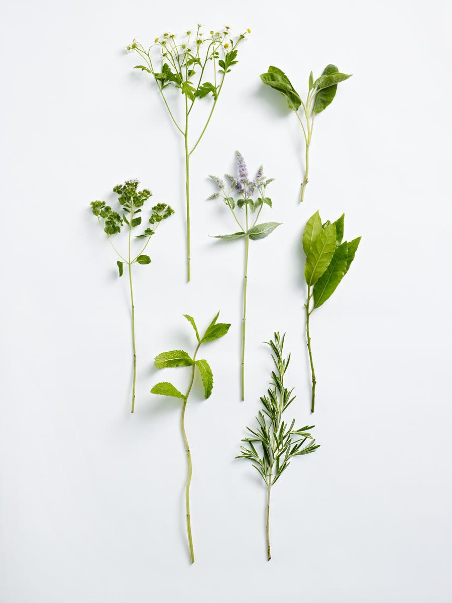 Kate-Davis-DK-Herb-Posy