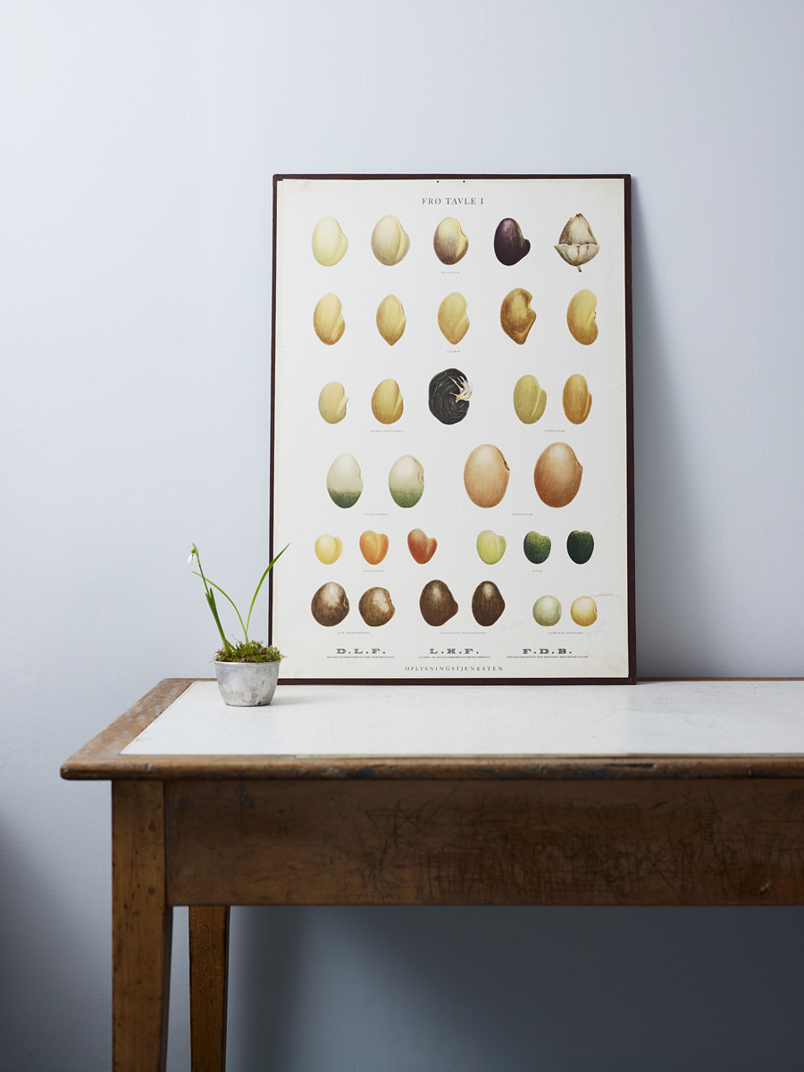 Kate-Davis-Susie-Seedchart